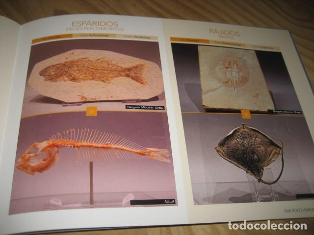 Coleccionismo de fósiles: QUE POCO HEMOS CAMBIADO. FOSILES, PALEONTOLOGIA - Foto 27 - 228509545