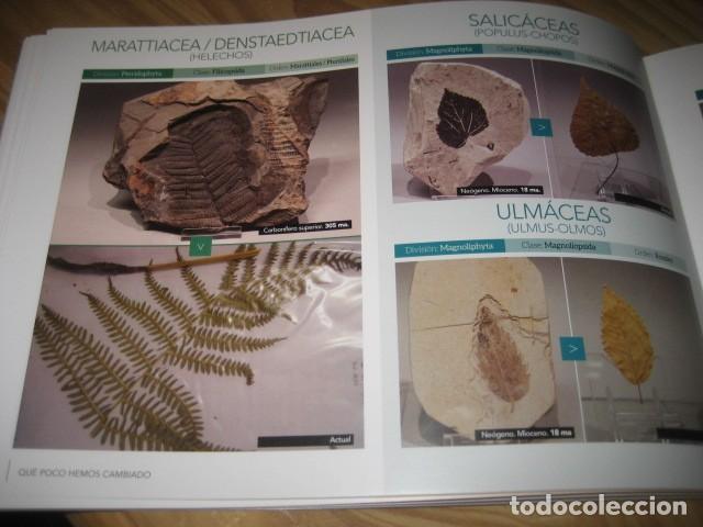 Coleccionismo de fósiles: QUE POCO HEMOS CAMBIADO. FOSILES, PALEONTOLOGIA - Foto 30 - 228509545