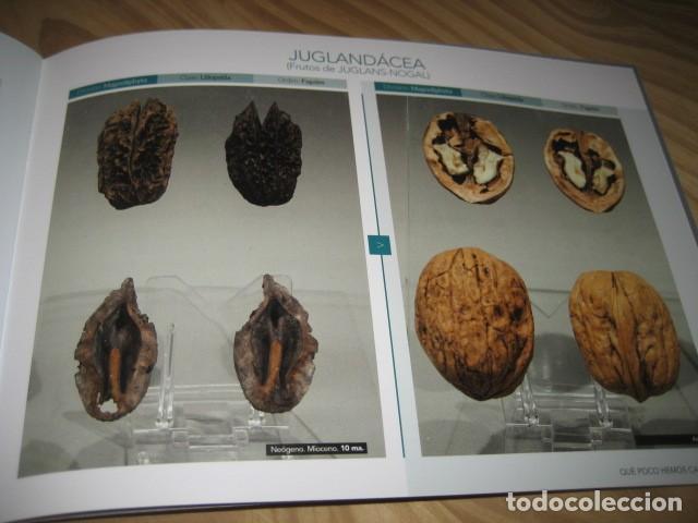 Coleccionismo de fósiles: QUE POCO HEMOS CAMBIADO. FOSILES, PALEONTOLOGIA - Foto 31 - 228509545