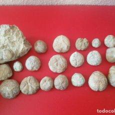 Coleccionismo de fósiles: LOTE FOSIL FOSSIL 20 UDS ERIZO DE MAR EQUINODERMO ECHINOID OURSIN. Lote 141817966