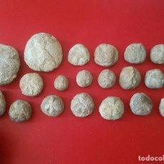 Coleccionismo de fósiles: LOTE FOSIL FOSSIL 20 UDS ERIZO DE MAR EQUINODERMO ECHINOID OURSIN. Lote 277224643