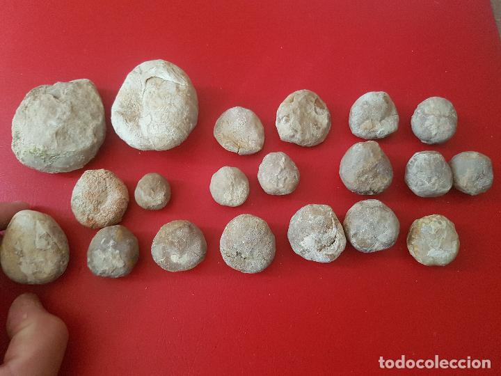 Coleccionismo de fósiles: LOTE FOSIL FOSSIL 20 UDS ERIZO DE MAR EQUINODERMO ECHINOID OURSIN - Foto 2 - 277224643