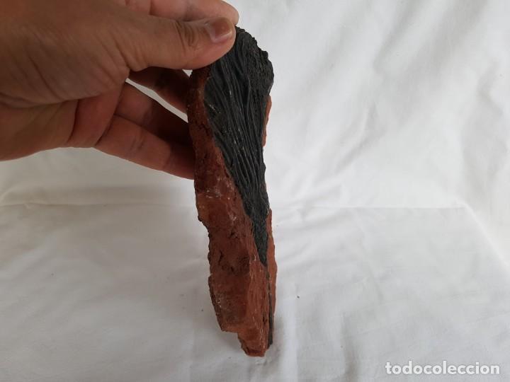 Coleccionismo de fósiles: MINERALES Y FOSILES, CRINOIDEO - Foto 4 - 143434958