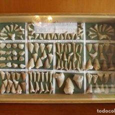 Coleccionismo de fósiles: COLECCIÓN DE 134 FÓSILES DIENTES DE DIFERENTES ESPECIES DE TIBURONES. Lote 144109738