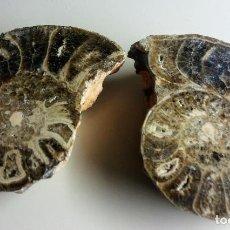 Coleccionismo de fósiles: DOS (2) ESPECTACULARES AMMONITES FOSILIZADOS. Lote 144342350