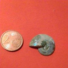 Coleccionismo de fósiles: FOSIL AMMONITE AMONITE CARACOL FOSILES MEDIO 150 MILLONES DE AÑOS. Lote 147641806