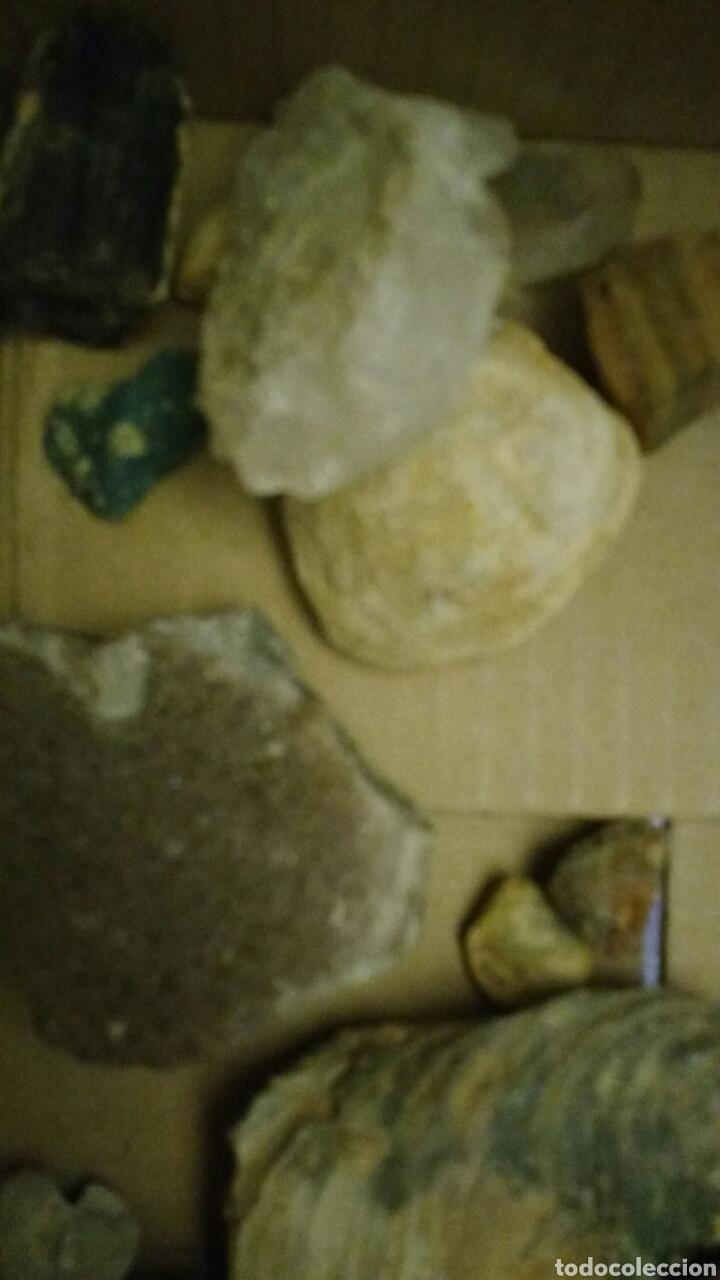 Coleccionismo de fósiles: Lote de fósiles y minerales. - Foto 5 - 147733004