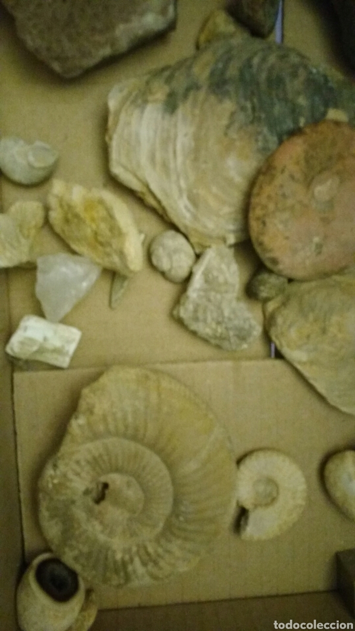 Coleccionismo de fósiles: Lote de fósiles y minerales. - Foto 9 - 147733004
