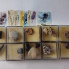 Coleccionismo de fósiles: LOTE DIEZ ESTUCHES CLASIFICADORES DE FOSILES. Lote 147740118