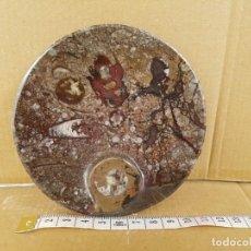Coleccionismo de fósiles: FOSILES AMMONITE. Lote 148645518