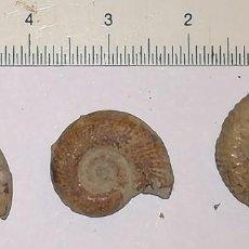 Coleccionismo de fósiles: 3 FOSILES DE AMONITES. Lote 150668854