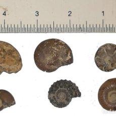 Coleccionismo de fósiles: 6 FOSILES DE AMONITES. Lote 150669174