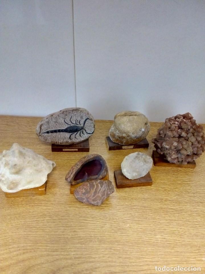 COLECCIÓN FÓSILES Y MINERALES (Coleccionismo - Fósiles)