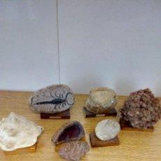 Coleccionismo de fósiles: COLECCIÓN FÓSILES Y MINERALES. Lote 152161174