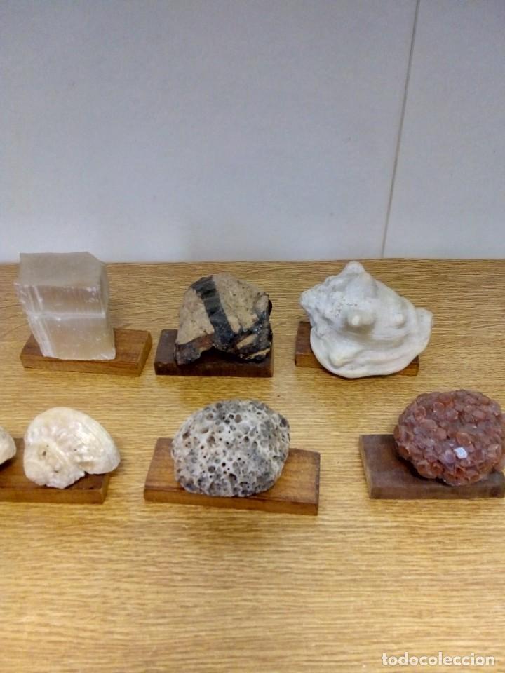 COLECCIÓN MINERALES Y FOSILES (Coleccionismo - Fósiles)