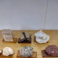 Coleccionismo de fósiles: COLECCIÓN MINERALES Y FOSILES. Lote 152161734