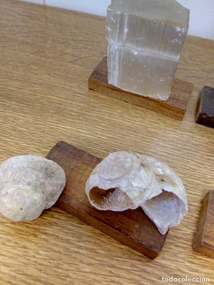 Coleccionismo de fósiles: Colección minerales y fosiles - Foto 5 - 152161734