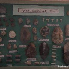 Coleccionismo de fósiles: CAJA ACRISTALABA DE COLECCIÓN DE FOSILES MARINOS. Lote 155637866