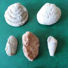 Coleccionismo de fósiles: LOTE DE 8 FOSILES. ALGUNO DIFÍCIL DE CONSEGUIR. . Lote 156624410
