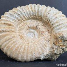 Coleccionismo de fósiles: FOSILES AMMONITE Nº5 DE GRAN TAMAÑO. Lote 158111866