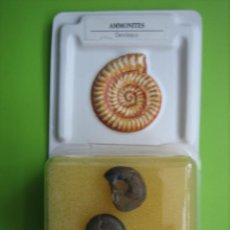 Coleccionismo de fósiles: FÓSIL DE COLECCION. Lote 158670202