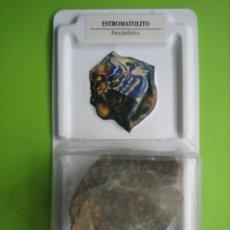 Coleccionismo de fósiles: FÓSIL DE COLECCION. Lote 158670418