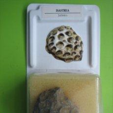 Coleccionismo de fósiles: FÓSIL DE COLECCION. Lote 183854272
