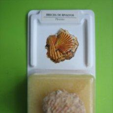 Coleccionismo de fósiles: FÓSIL DE COLECCION. Lote 158671258