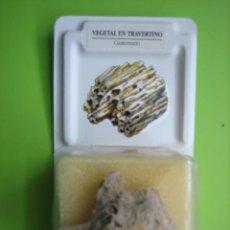 Coleccionismo de fósiles: FÓSIL DE COLECCION. Lote 158671434