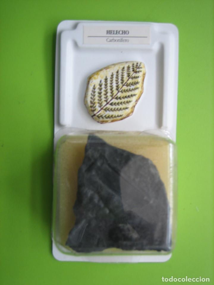 FÓSIL DE COLECCION (Coleccionismo - Fósiles)