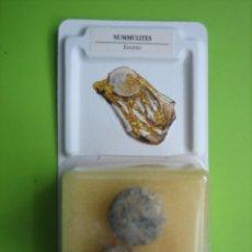 Coleccionismo de fósiles: FÓSIL DE COLECCION. Lote 158672446