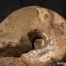 Coleccionismo de fósiles: FÓSIL DE NAUTILO - TOARCIAN DE CHAROLLES, PARTIDO CALCIFICADO - CENOCERAS AFF. THIOLLIERI. Lote 158886158