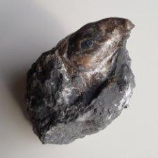 Coleccionismo de fósiles: RARO MEJILLÓN FOSILIZADO. MINERALES. FÓSILES. Lote 142803918