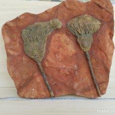Coleccionismo de fósiles: FOSIL CRINOIDEO N8. Lote 159415090