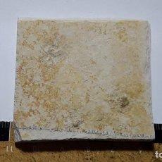 Coleccionismo de fósiles: FOSIL DE ESTRELLA SACCOCOMA PECTINATA.JURASICO, ALEMANIA.. Lote 160455250