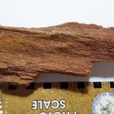 Colecionismo de fósseis: FOSIL DE ARBOL. XILOPALO. CRETACICO. SUR DE EUROPA. OPORTUNIDAD.. Lote 160568770
