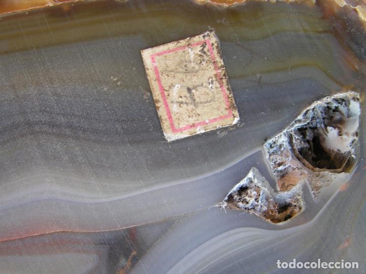 Coleccionismo de fósiles: ÁGATA . REBANADA Y PULIDA.BRASIL. - Foto 21 - 161932390