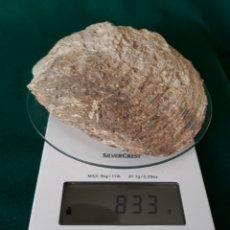 Coleccionismo de fósiles: FÓSIL CONCHA OSTRA. Lote 164211326