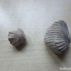 Coleccionismo de fósiles: 2 CONCHAS FÓSILES VER DESCRIPCIÓN. Lote 166537834