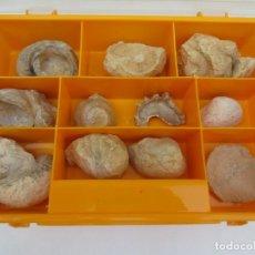 Coleccionismo de fósiles: CAJA CON 12 FÓSILES.. Lote 168075116