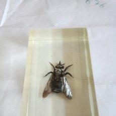 Coleccionismo de fósiles: INSECTO EN BLOQUE DE METACRILATO . Lote 169667368