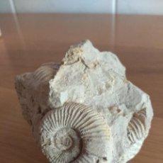 Coleccionismo de fósiles: FOSIL AMONITE CON SOPORTE DE PLASTICO. Lote 169894788