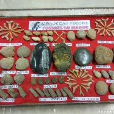 Coleccionismo de fósiles: FÓSIL FÓSILES DE MARRUECOS 77 UNIDADES APROX. Lote 171205957
