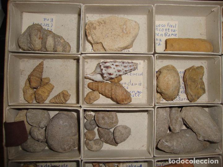 Coleccionismo de fósiles: BONITA COLECCION DE FOSILES Y MINERALES CON NOMBRES Y FECHADOS AÑOS 30 VER FOTOS - Foto 2 - 171883303