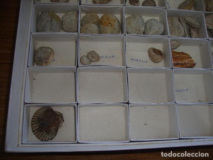 Coleccionismo de fósiles: BONITA COLECCION DE FOSILES Y MINERALES CON NOMBRES Y FECHADOS AÑOS 30 VER FOTOS - Foto 8 - 171883303