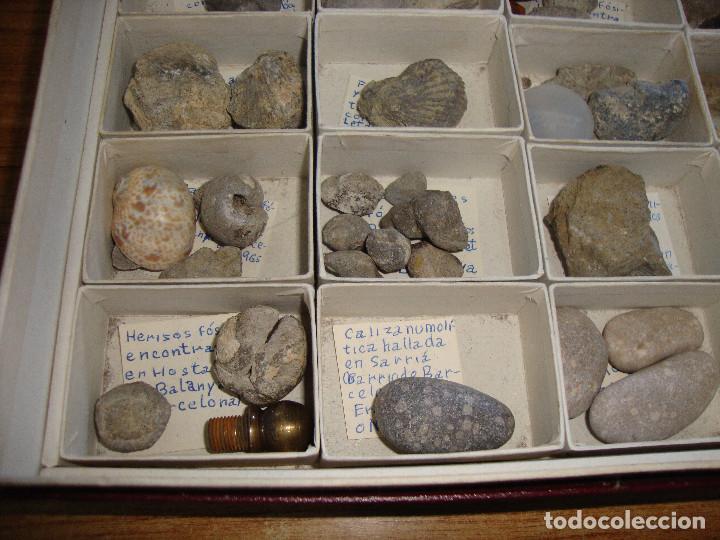 Coleccionismo de fósiles: BONITA COLECCION DE FOSILES Y MINERALES CON NOMBRES Y FECHADOS AÑOS 30 VER FOTOS - Foto 17 - 171883303