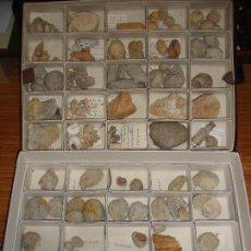 Coleccionismo de fósiles: BONITA COLECCION DE FOSILES Y MINERALES CON NOMBRES Y FECHADOS AÑOS 30 VER FOTOS. Lote 171883303