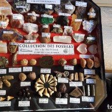 Coleccionismo de fósiles: COLECCION DE FOSILES PEQUEÑOS. Lote 173443205