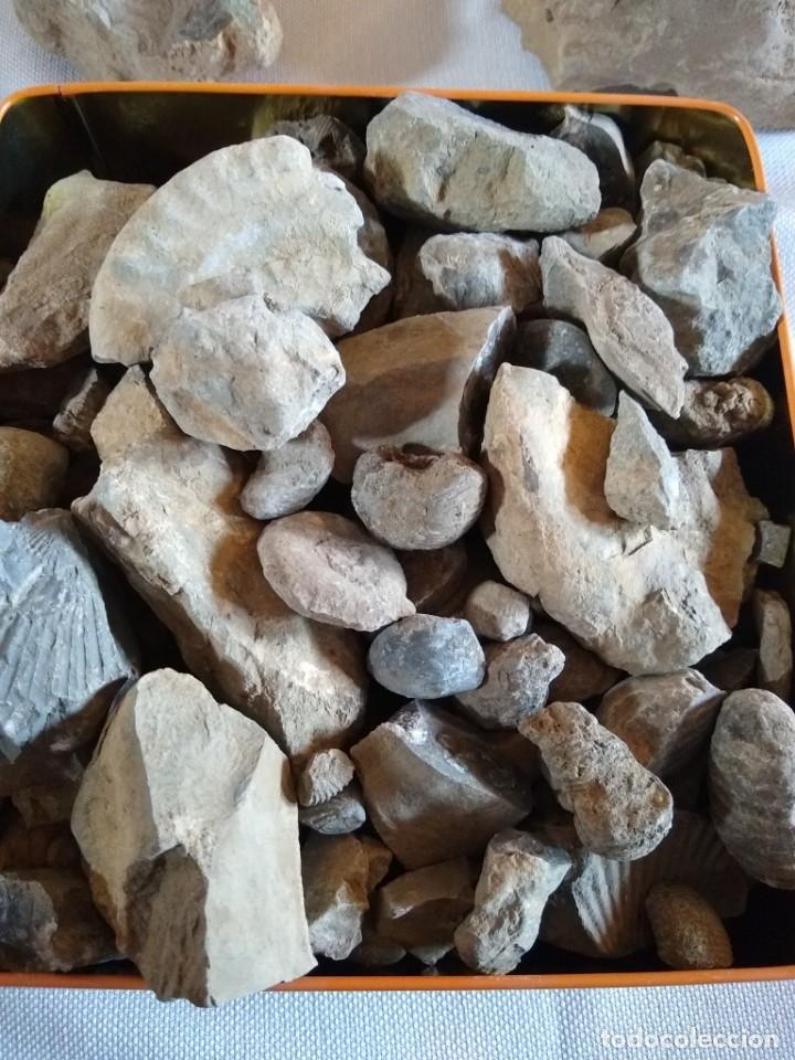 Coleccionismo de fósiles: Lote de fósiles y minerales - Foto 3 - 174179128