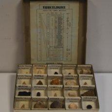 Coleccionismo de fósiles: CAJA DE FÓSILES. Lote 174394698